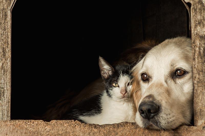 Chirurgische Behandlung der Cushings-Krankheit bei Hunden